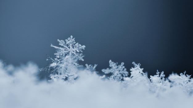 ブルーミーライフは北海道も対象エリア?冬はどうなるの?【まとめ】