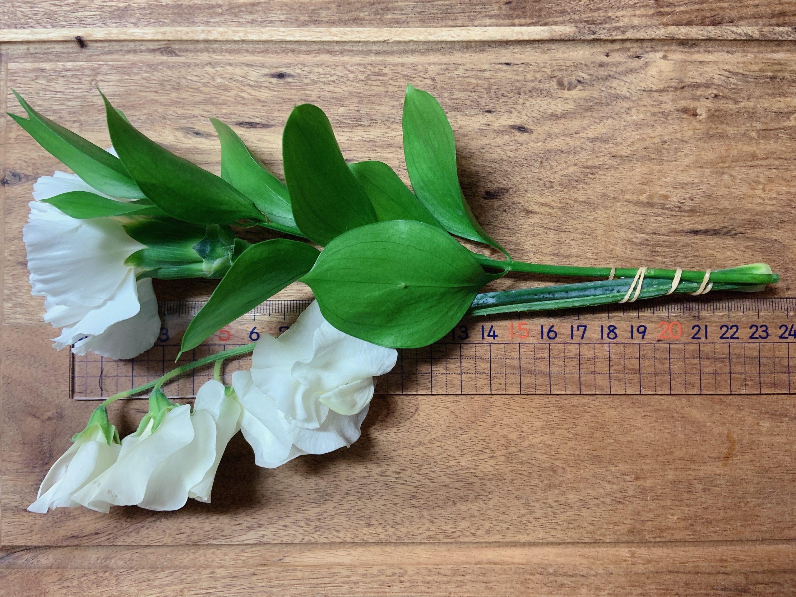 ライフルフラワーのライトプラン:初回で届いたお花