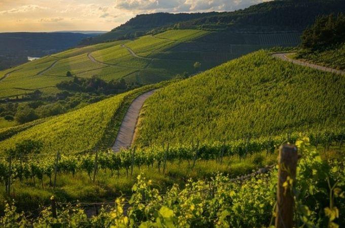 ワインの産地を選ぶ